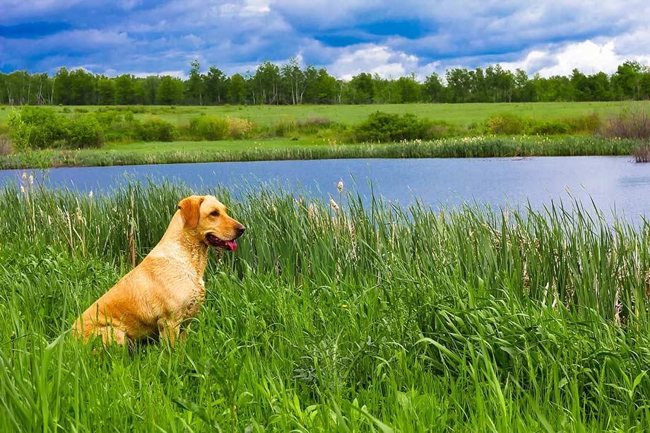 Urlaub mit Hund am Kielkanal